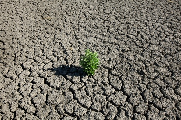 A weed grows out of the dry cracked bed of O.C. Fisher Lake on July 25, 2011 in San Angelo, Texas.